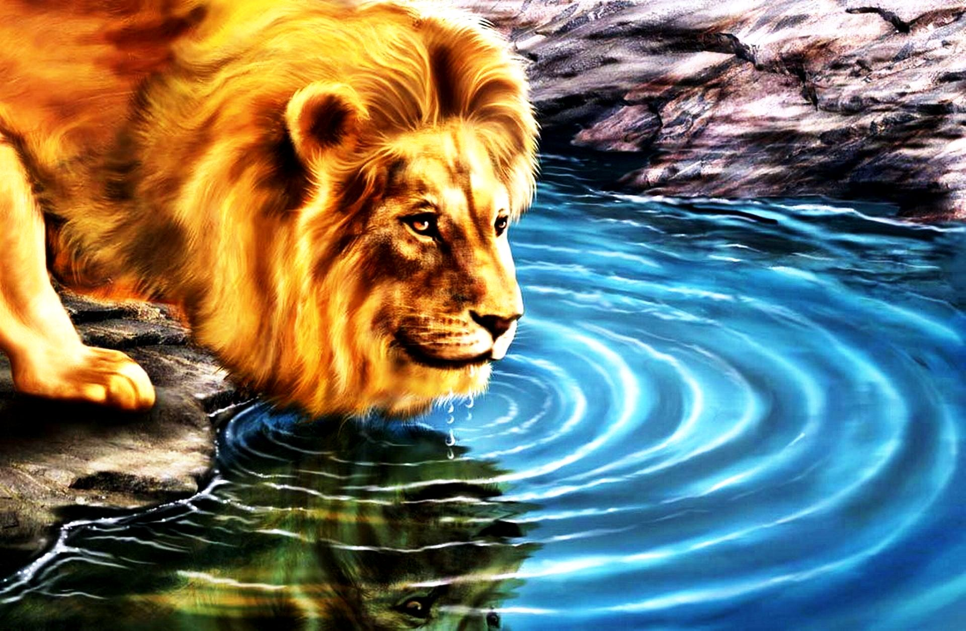 3d lion drinking water