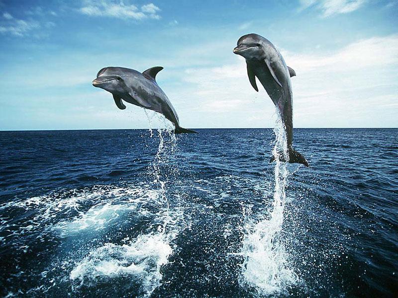 3d dolphins jump sea