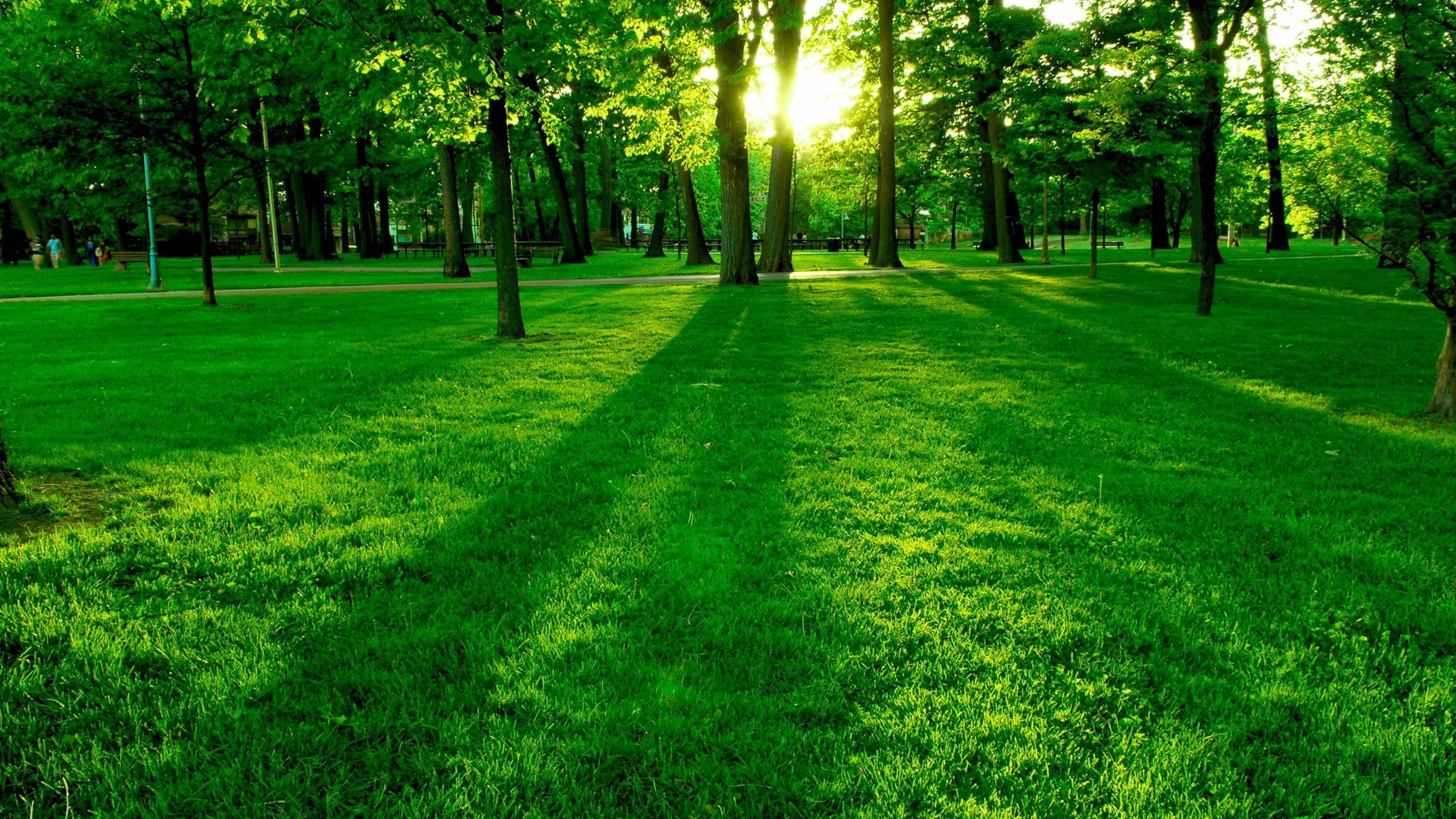 4k green grass park