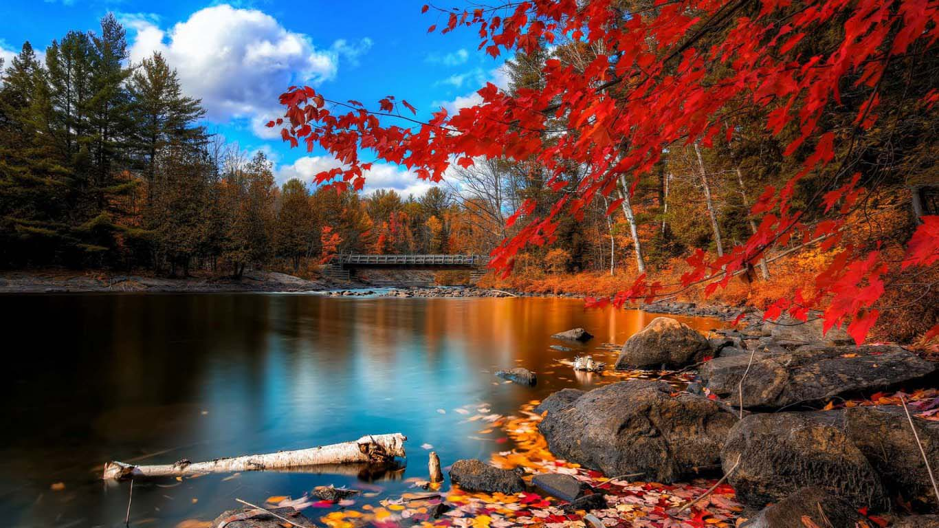 4k Lake Red Autumn Leaves