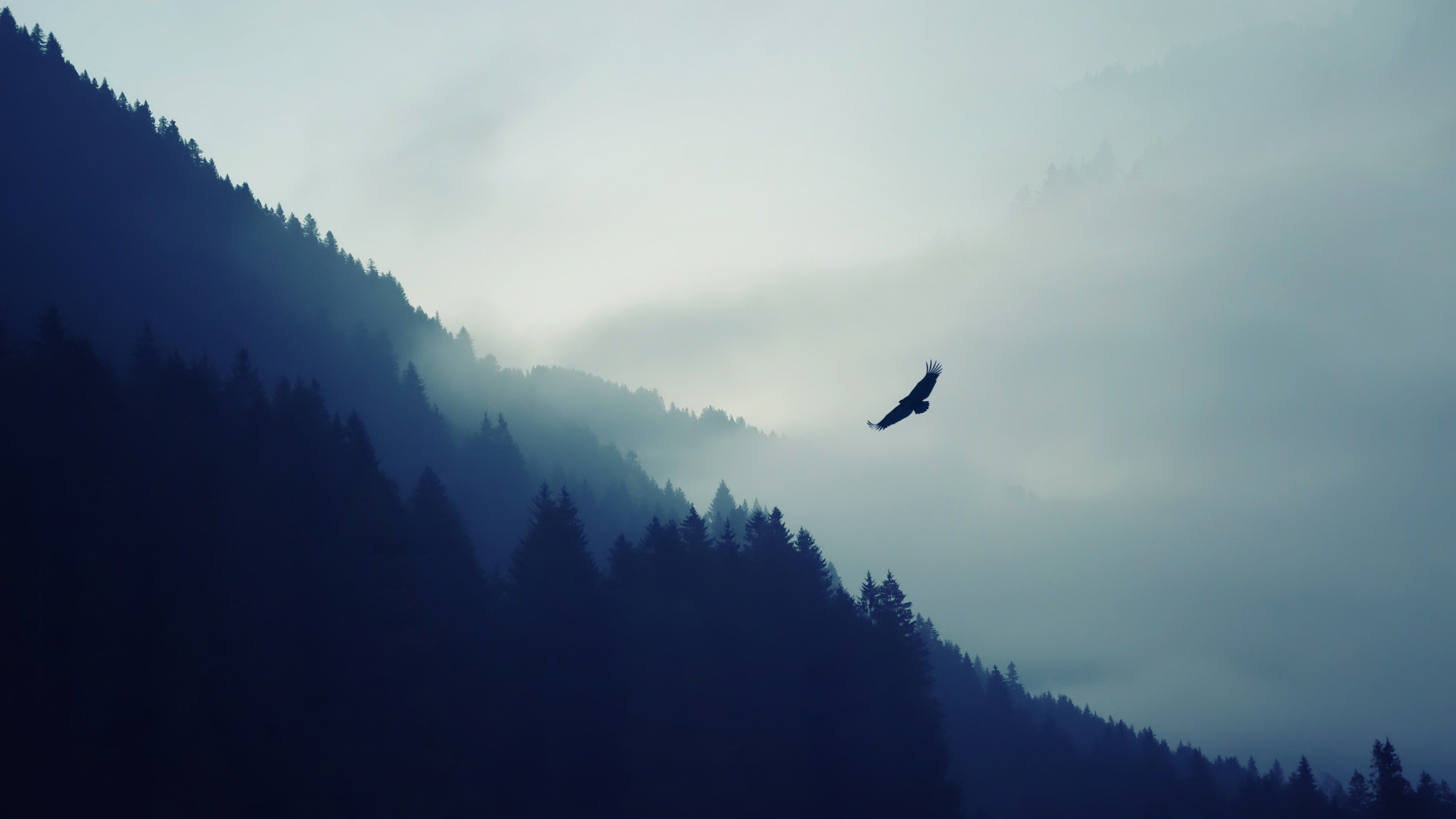 4k Nature Mountain Eagle Fog
