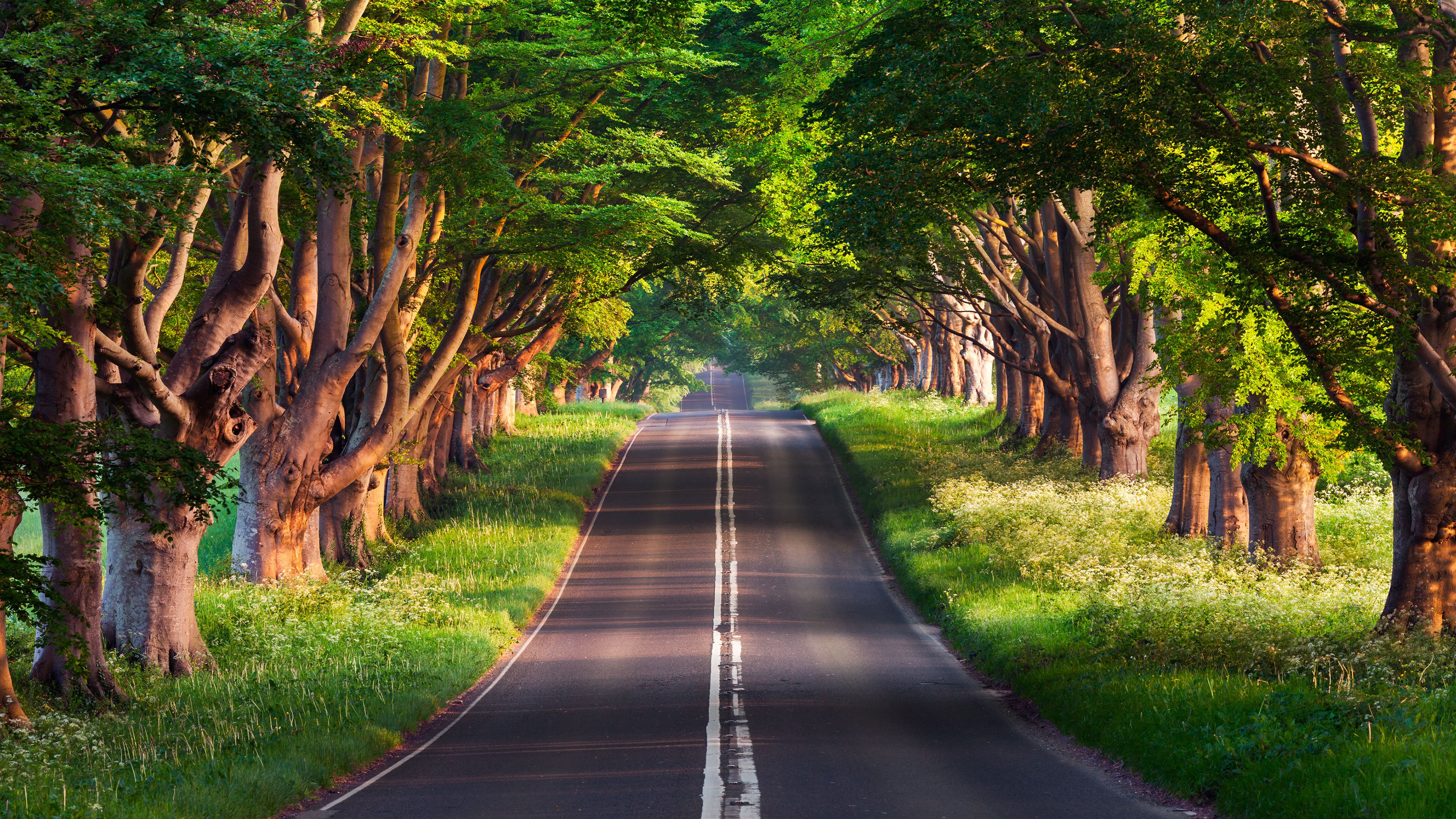 4k Road Covered Trees