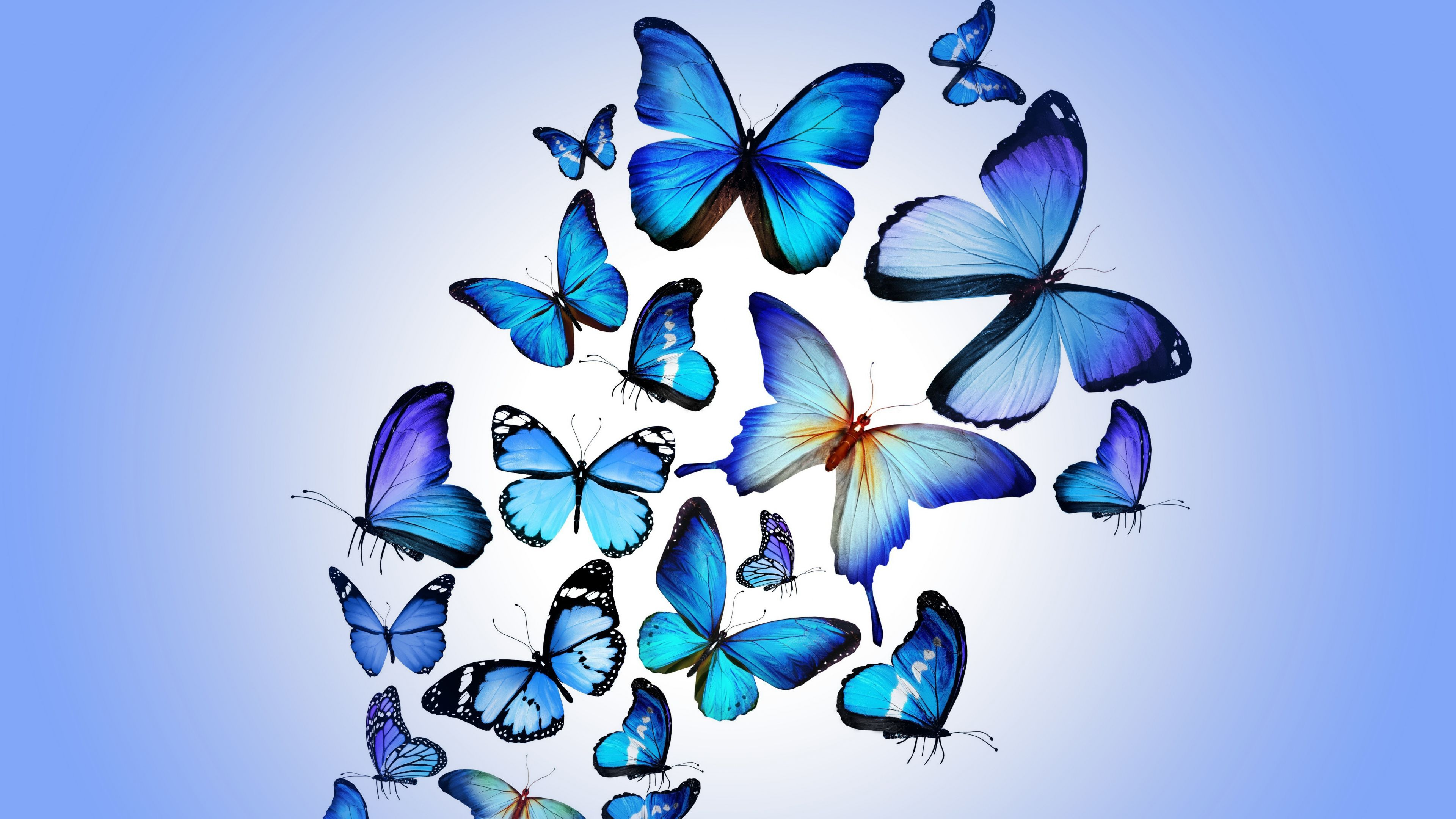 Butterfly Colorful Blue Drawing Art