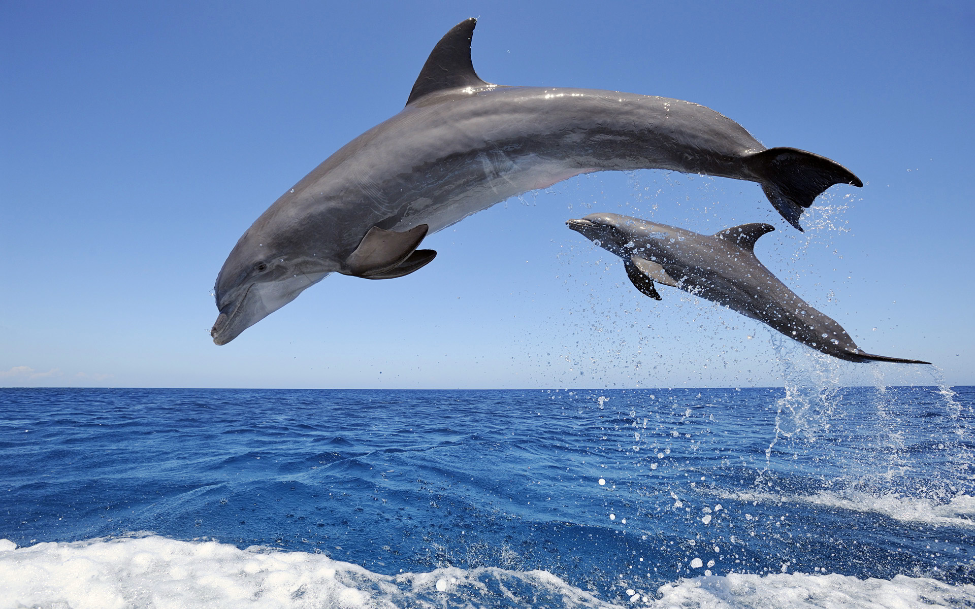 dolphins jumps over the sea