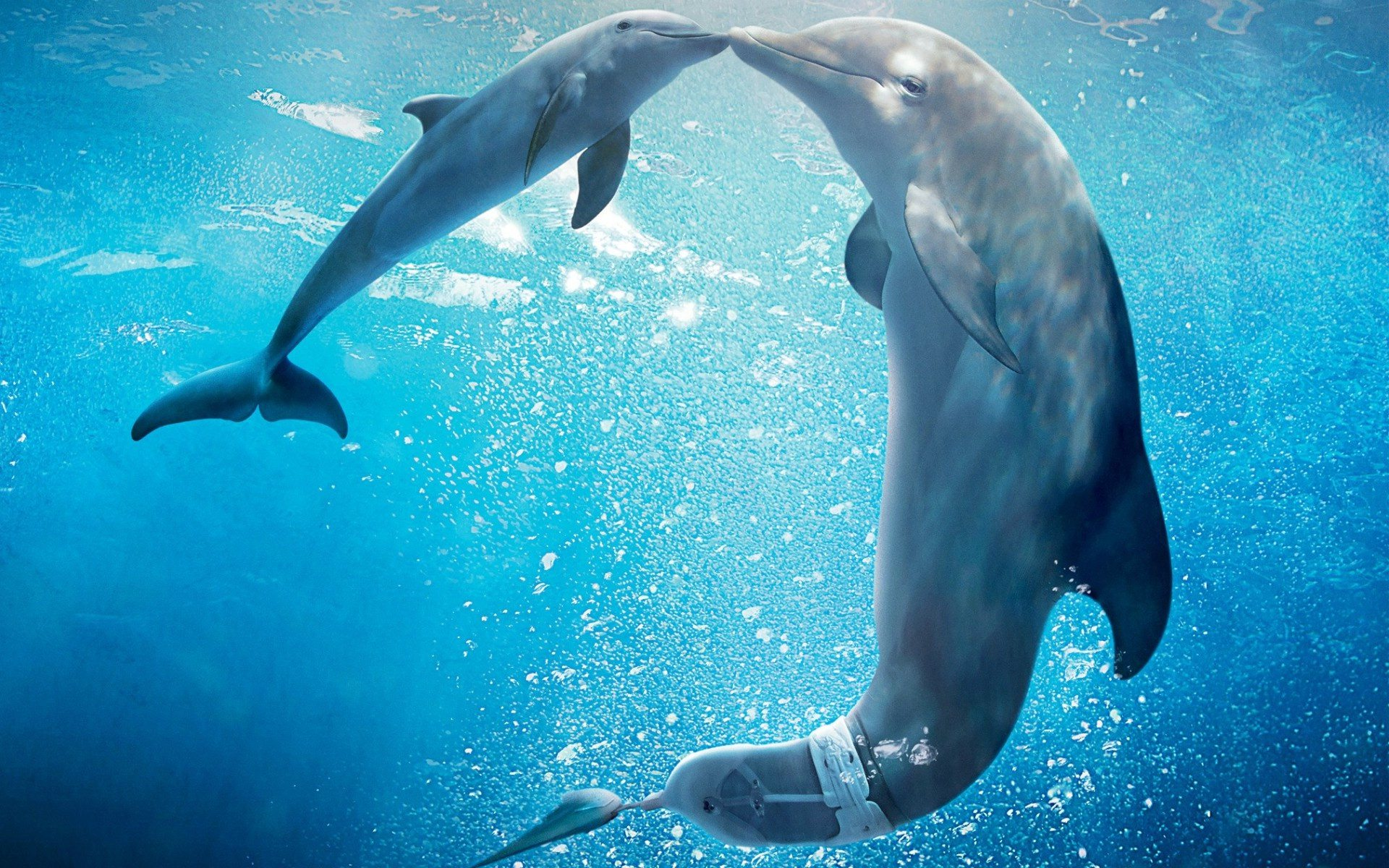 dolphins kiss underwater
