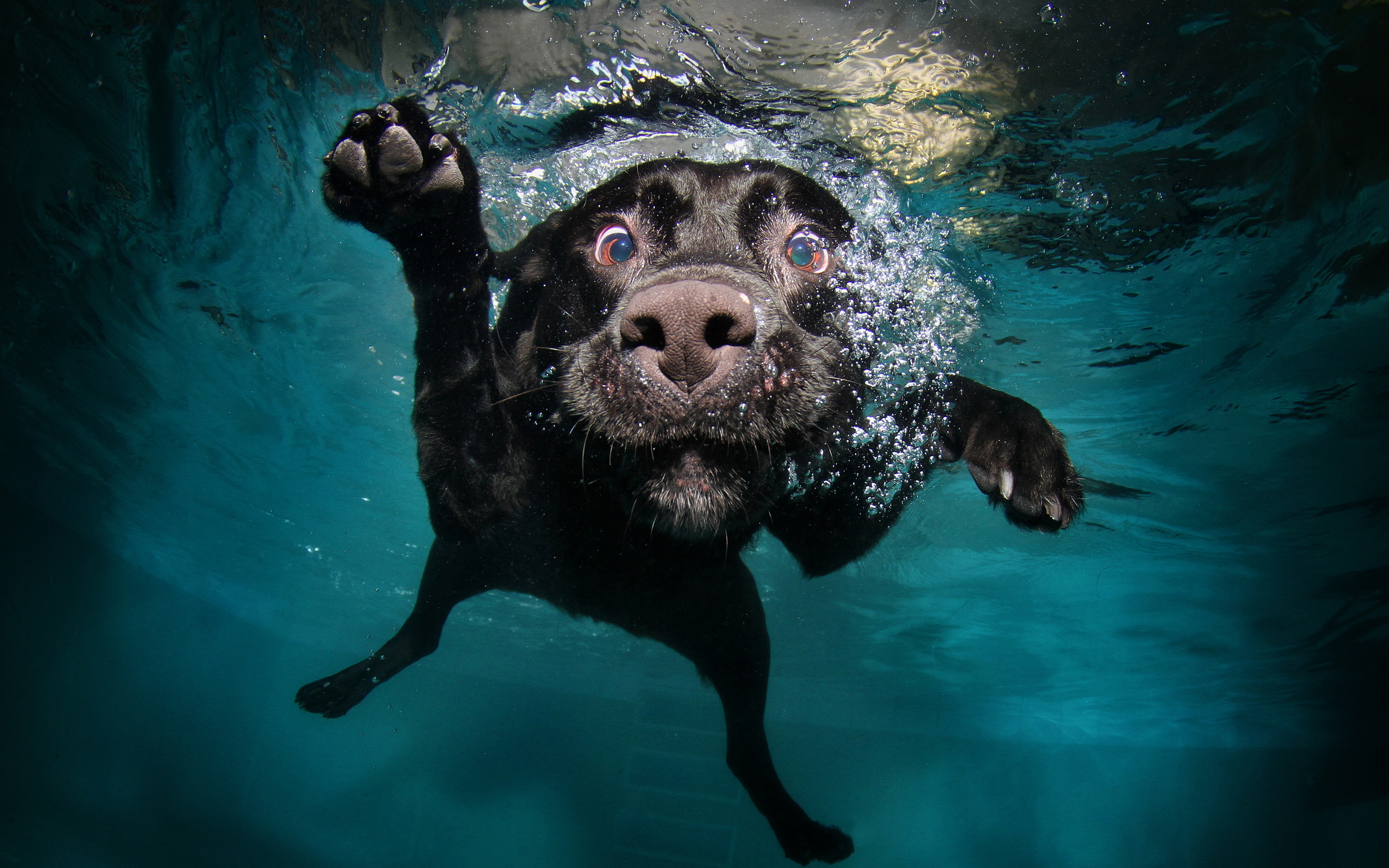 funny dog swim under water