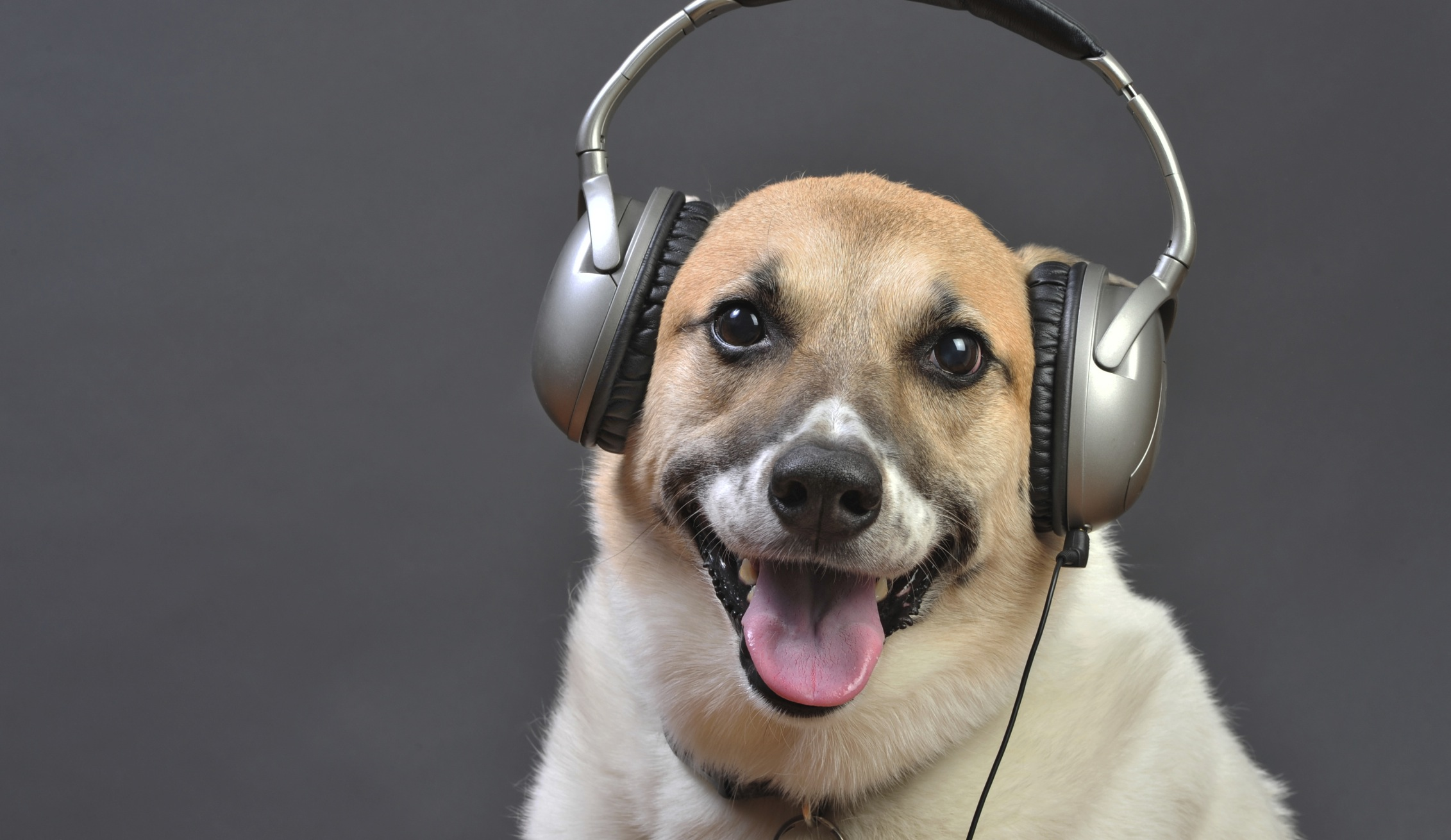 funny dog wearing headset