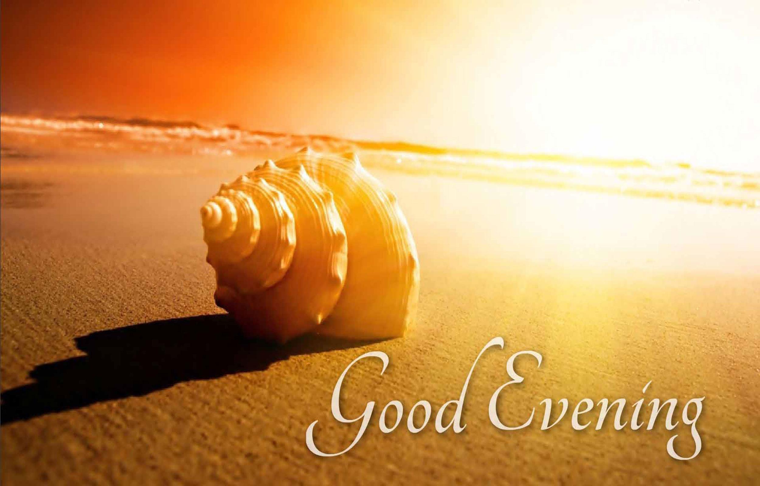 Good Evening Wish Sea Shell